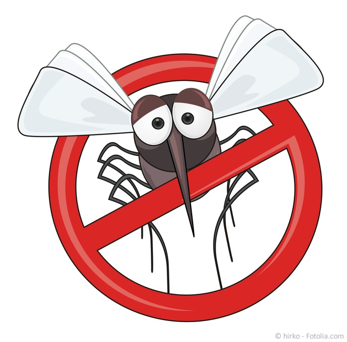 "These: Google Update ""Mosquito"""